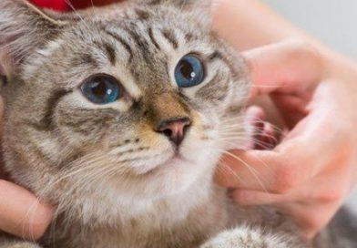 Kedilerde mantar neden olur belirtileri ve tedavisi
