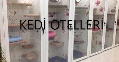 Ankara istanbul izmir kedi oteli liste