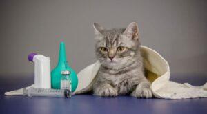 Kedi sağlığı nasıl korunur