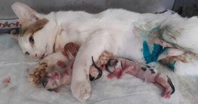 kedilerde-doğum