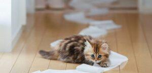 kedilerde-eğitim-nasıl-olmalı.