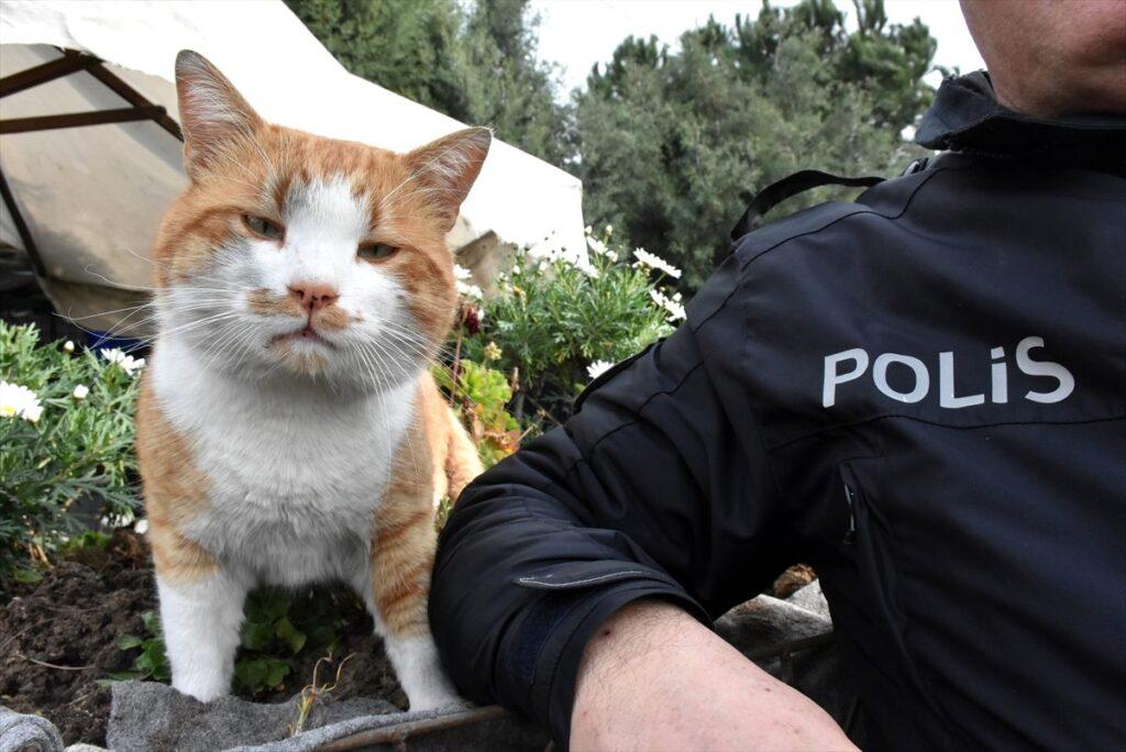 Kediye-nasıl-ceza-verilir