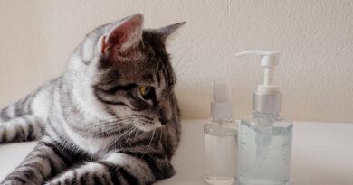 kedileri uzaklaştırmak için neler yapılır sprey yeterli mi