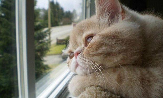 kediler evde yalnız kalabilir mi