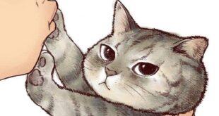 kedilerin-nefret-ettigi-seyler-nelerdir